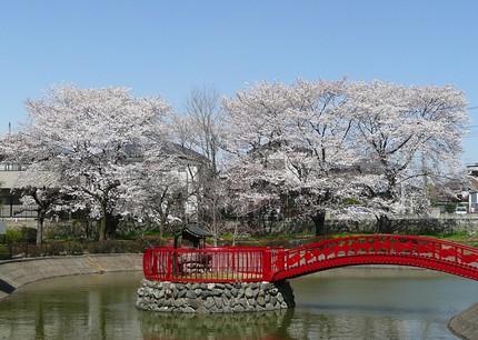 Sakura4011
