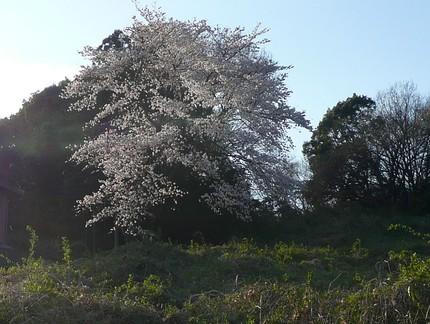 Sakura4012