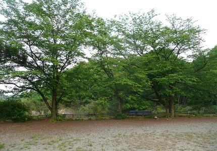 Hazakurano
