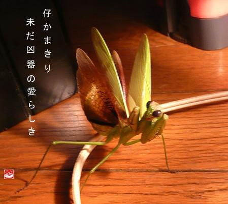 Kokamakiri