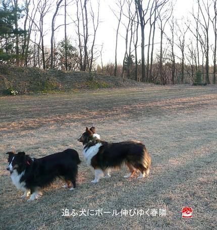 Harudonari