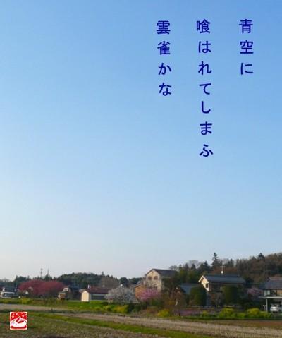 Hibari_2