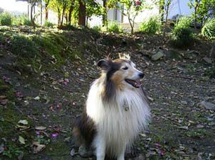 Tajio5