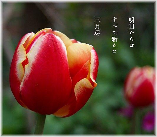 Sangatujin2_2