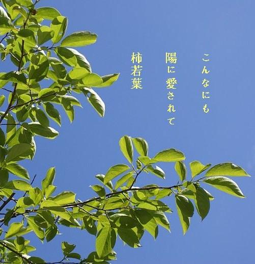 Kakiwakaba3_2