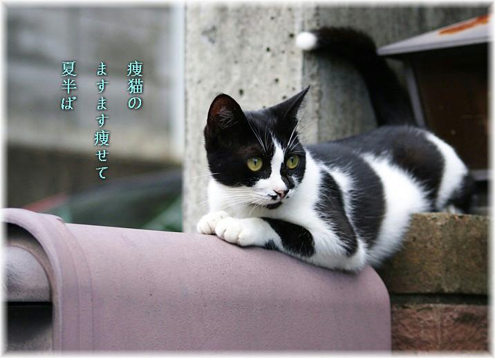 Yaseneko2