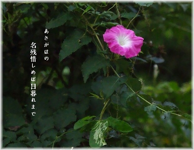 Yuasagao2