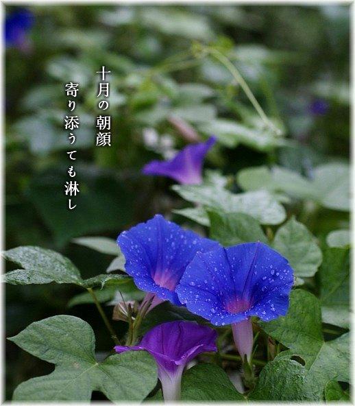 Jyugatuasagao
