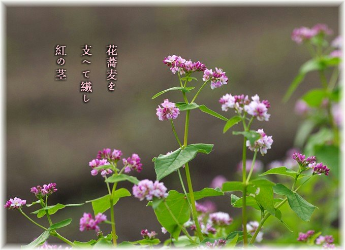Hanasoba3