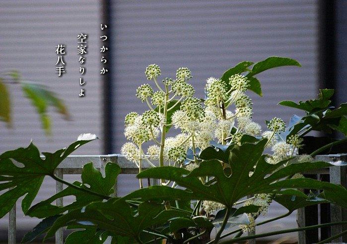 Hanayatude3