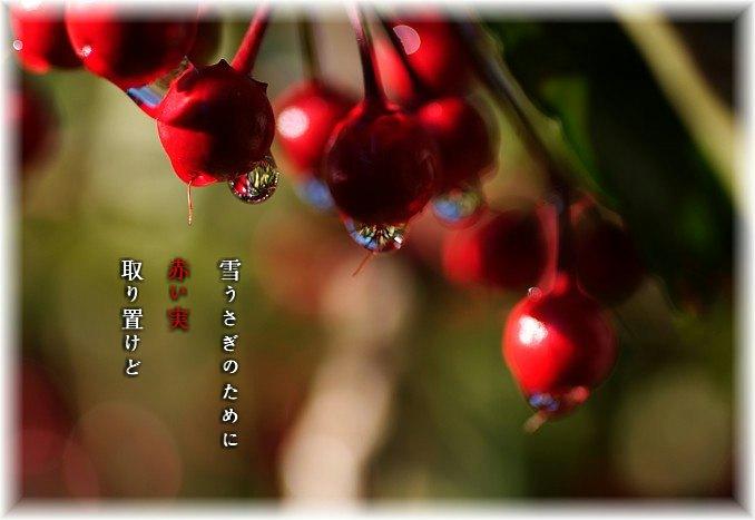 Akaimi2