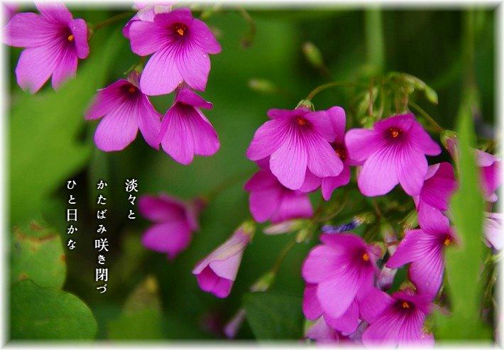 Katabami1moji