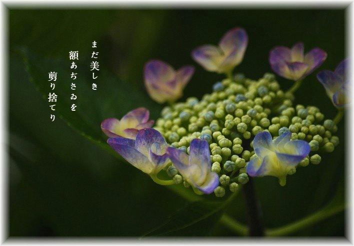 Gakunohanamoji