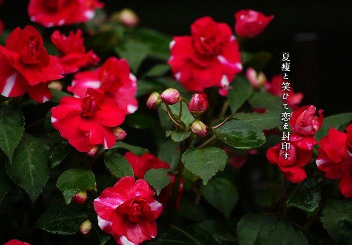 Natuyase2moji