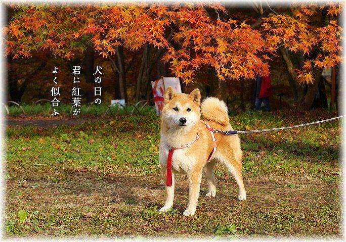 Inunohi1moji