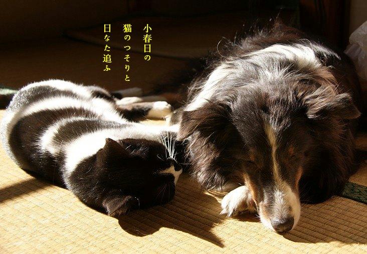 Hinataneko1moji