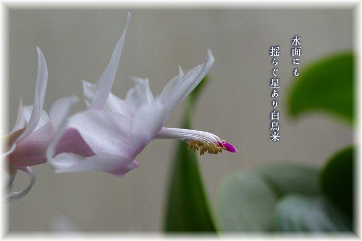 Hakutyo1moji