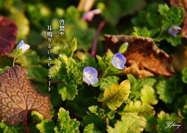 Keititumoji