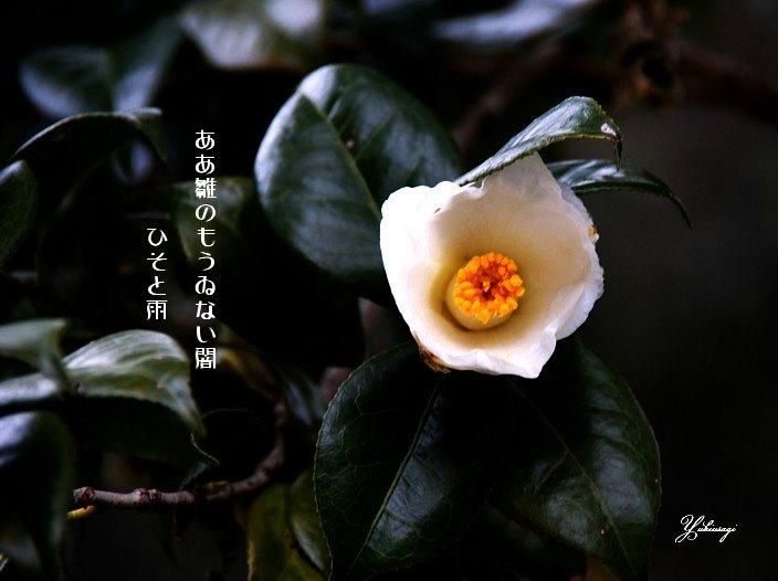 Hinaosame2