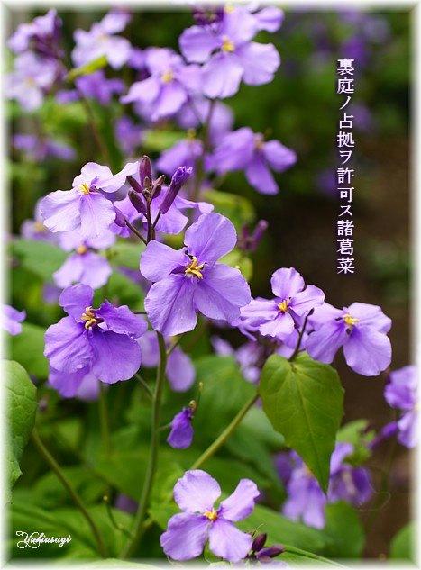 Syokatu1moji