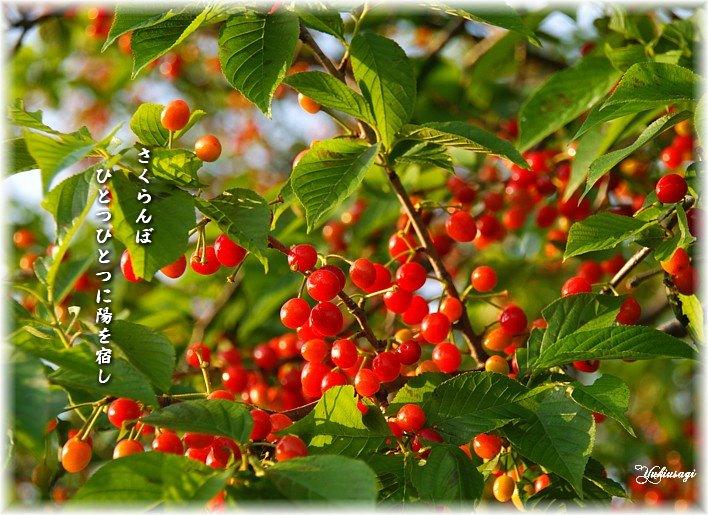 Sakuranbo3moji