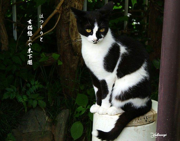 Kositayamimoji
