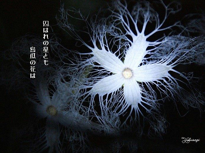 Hanakarasumoji