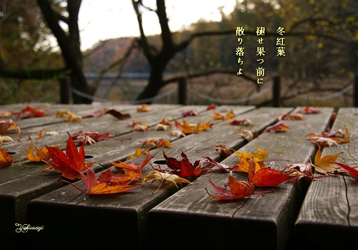 Fuyumomiji2moji_2