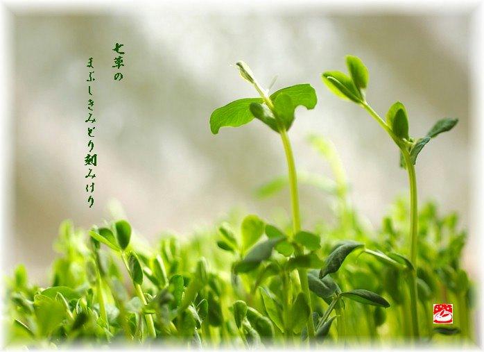 Nanakusa1moji