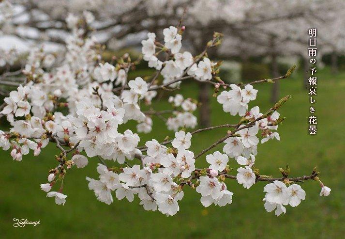 Hanagumorimoji