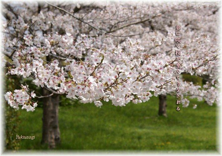 Sakura01moji