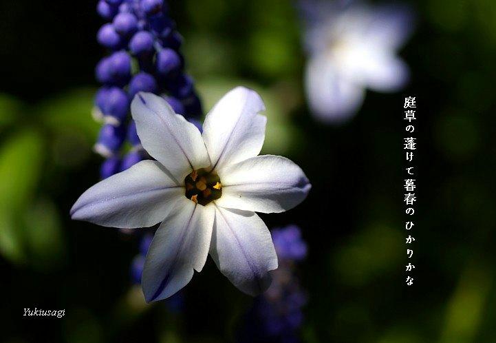 Bosyunmoji