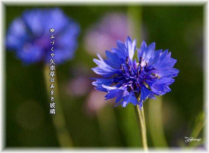 Yaguruma1moji