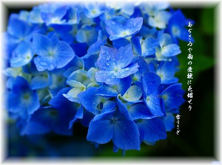 Ajisai612cmoji_2