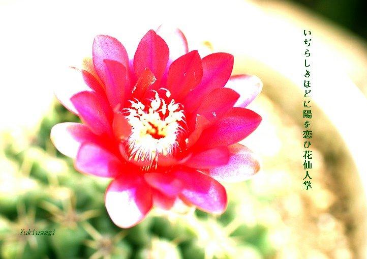 Hanasaboten616moji2_2