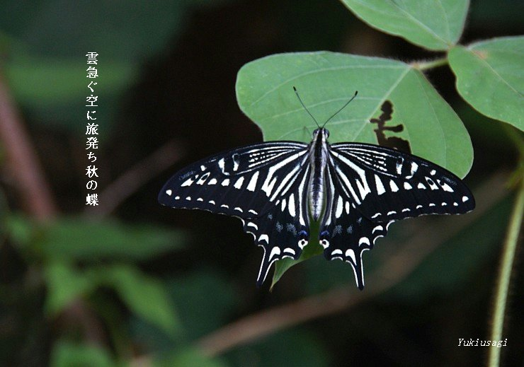 Akityo93moji