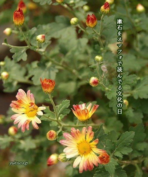 Bunkanohi113moji