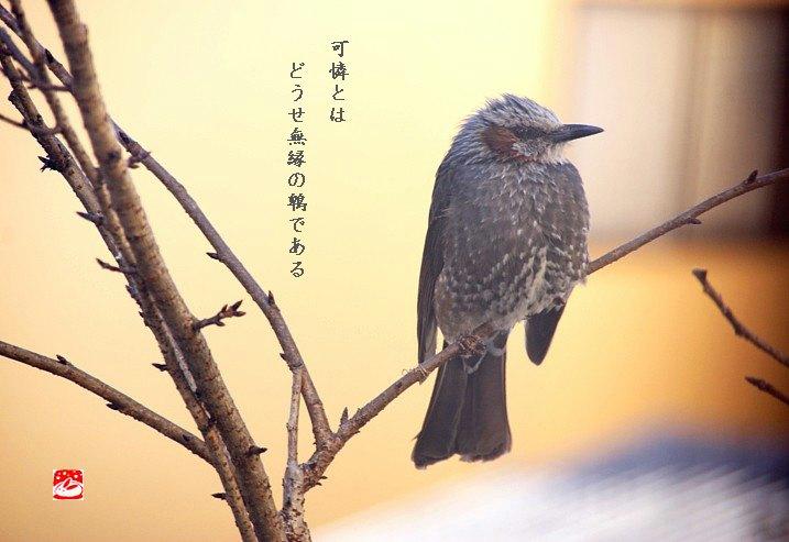 Hiyo128moji