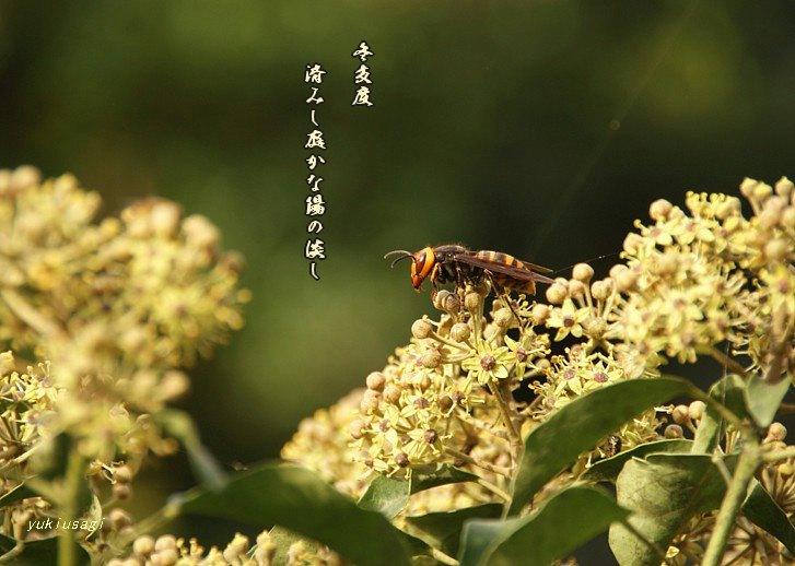 Fuyujitakumoji
