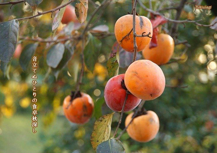 Akifukasi118moji