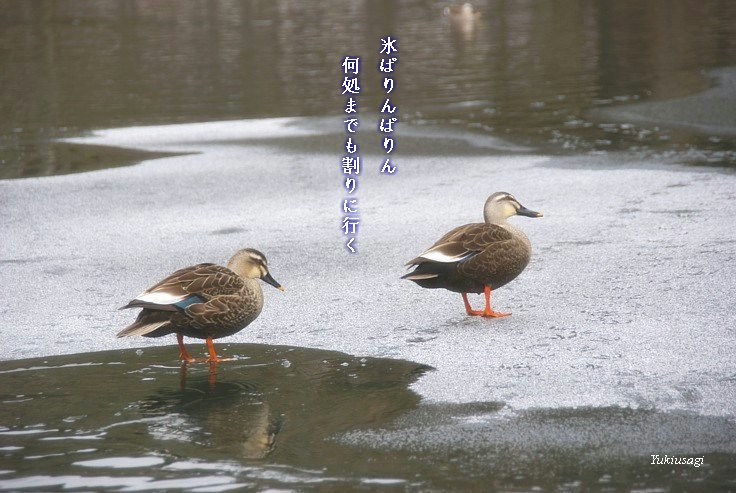Koorikaruizawahoseimoji