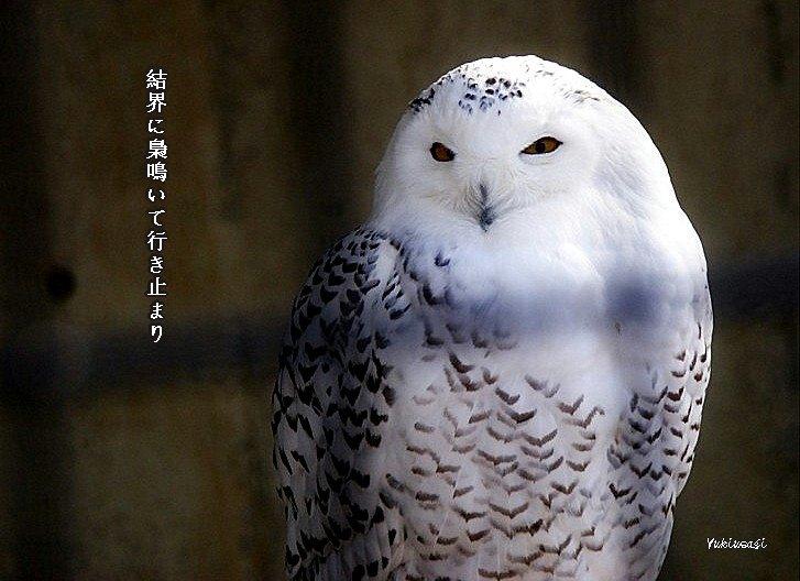 Fukurouhoseimoji_2