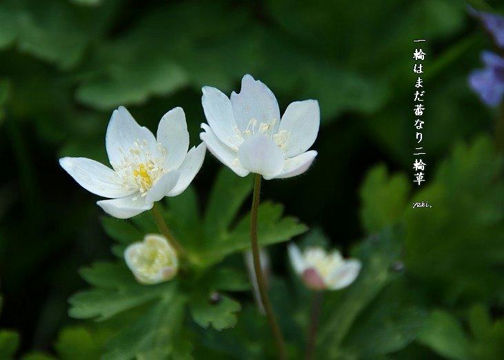 Nirinsoumoji_2