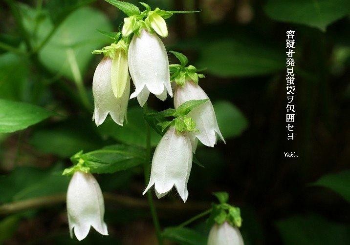 Hotarubukuro621hoseimoji
