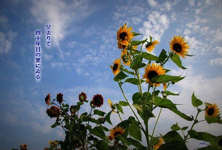 Himawari729mojihosei