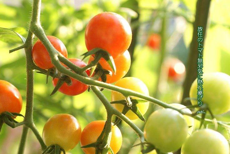 Tomatomoji