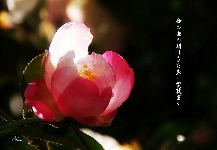 Gajyokakuhoseimoji