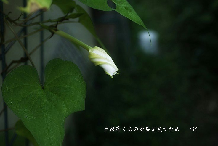 Hanadaneyugaohoseimoji2