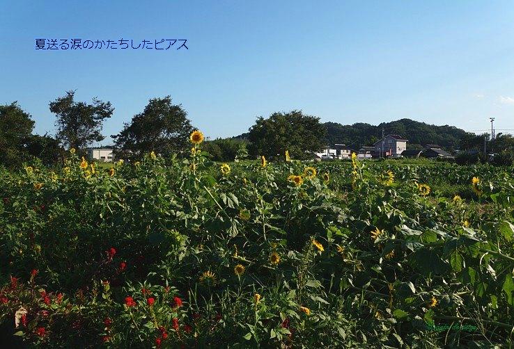 Natuokuru831moji
