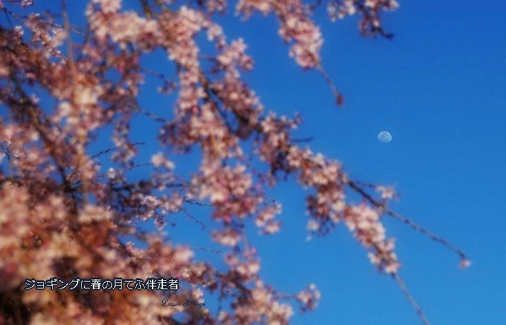 Sakuratuki47bhoseimoji2